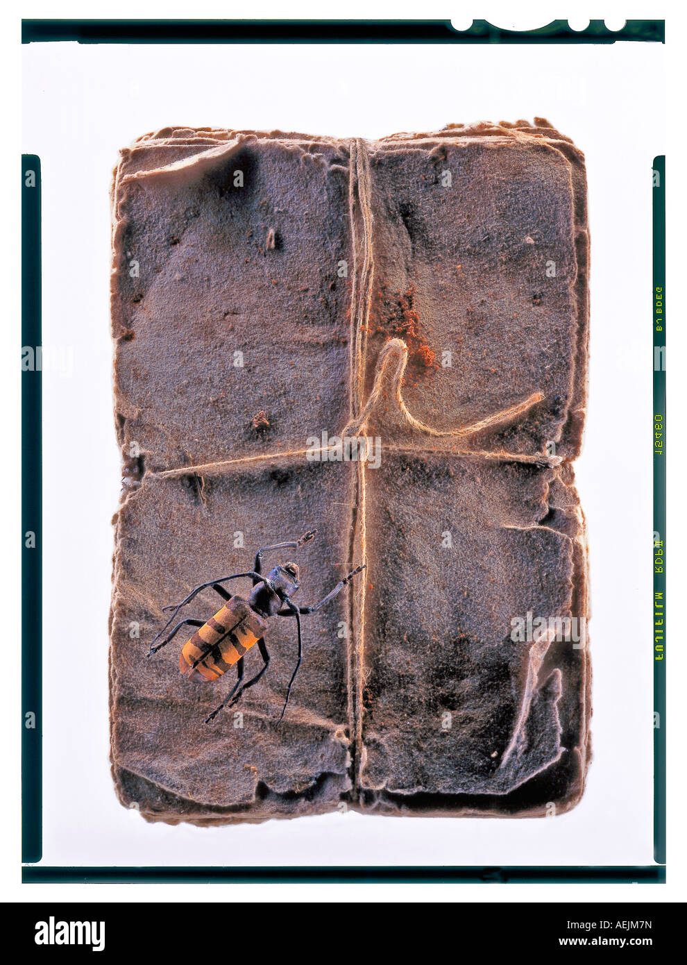 Old note book with yello-brown beetle on top - Stock Image