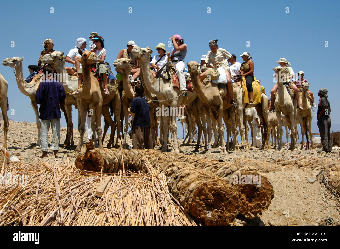 A group of tourists on camels on their way to Ras Abu Galum also Ras Abu Galoum or Ras Abu Gallume north of Dahab town Red Sea Sinai Peninsula Egypt - Stock Image