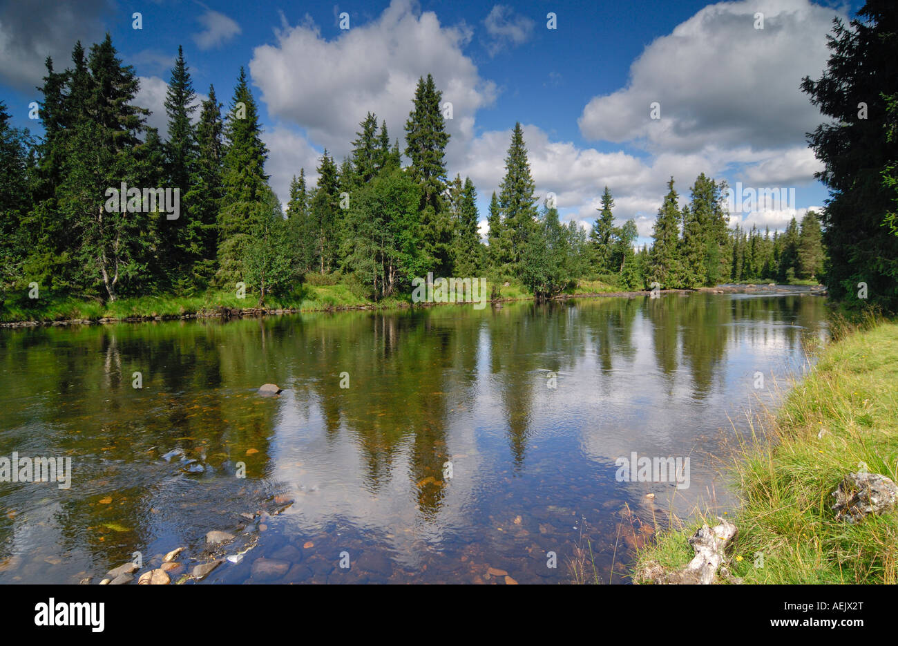 Firs reflecting in a river, Telemark, Norway, Scandinavia, Europe - Stock Image
