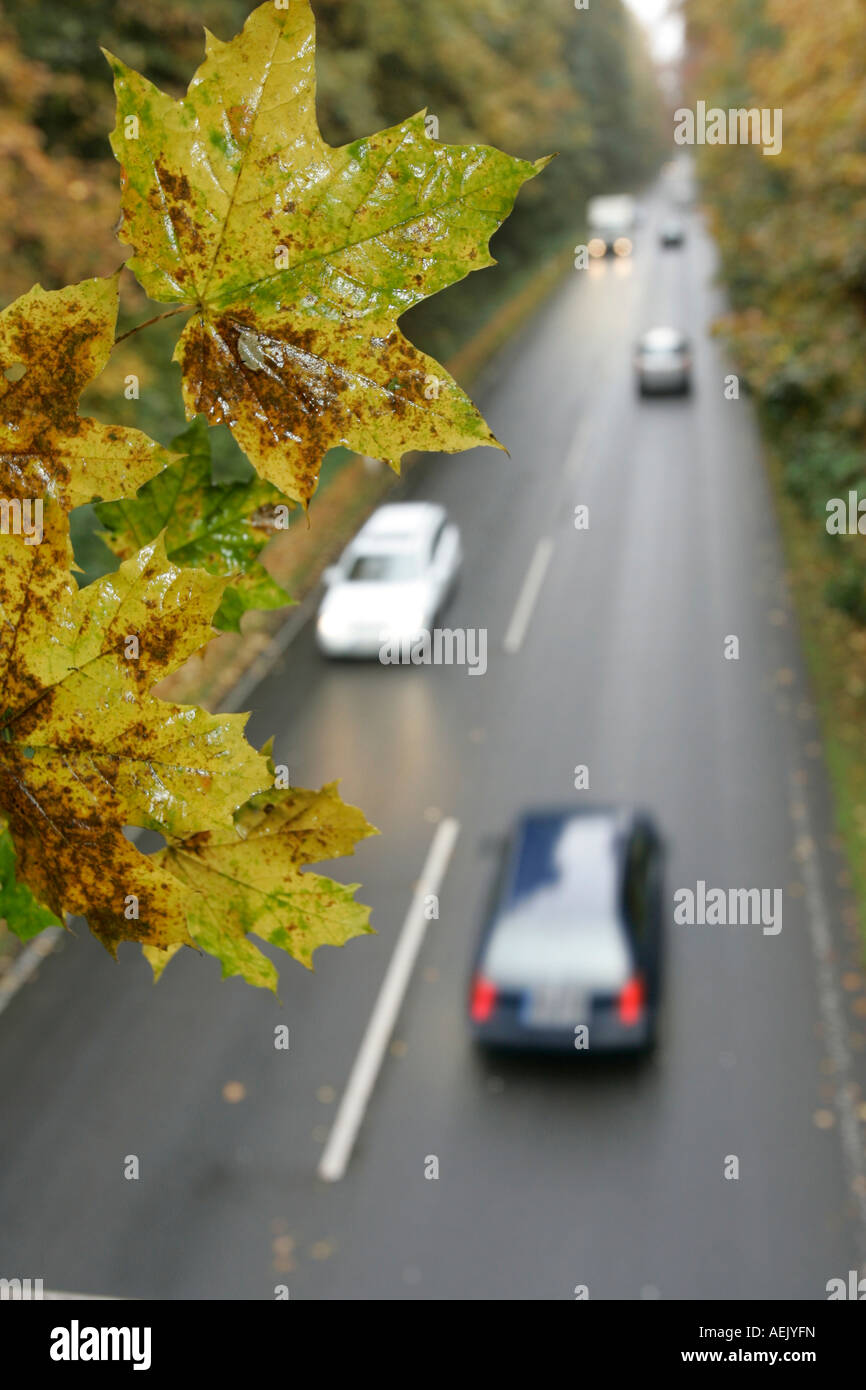 Cars on a rainy street with autumn leaves Stock Photo