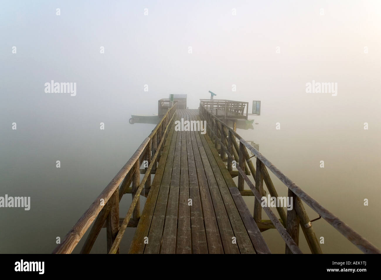 Early morning fog at the Federsee, Federseesteg, Upper Swabia, Baden-Wuerttemberg, Germany Stock Photo