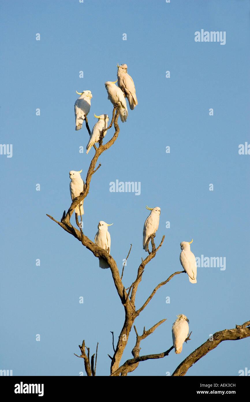 Bird On The Tree Cafe Menu