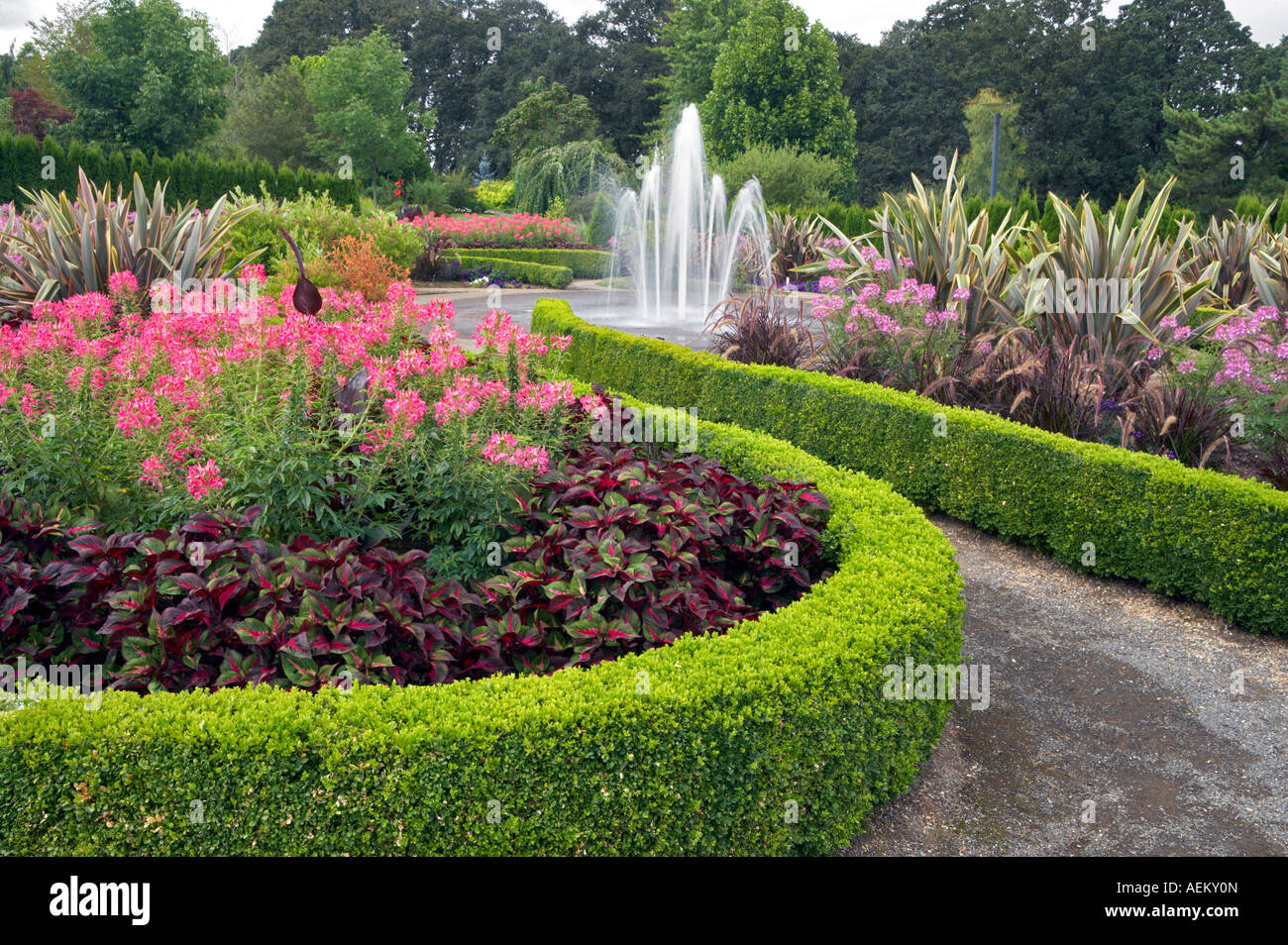 Hedges With Fountain And Spider Flowers Cleone Spinosa Oregon