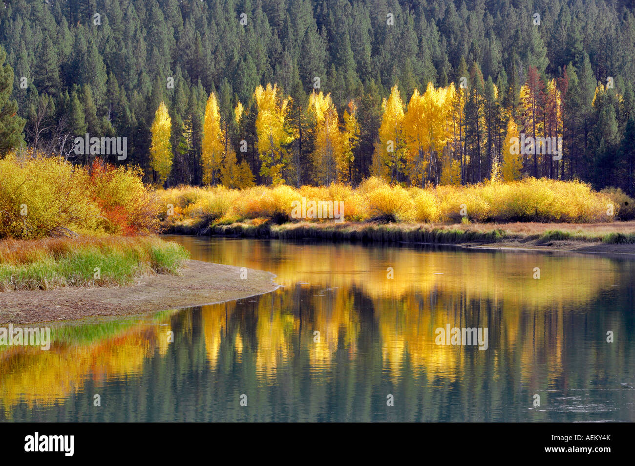 Fall colored aspenn trees and Deschutes River Central Oregon - Stock Image