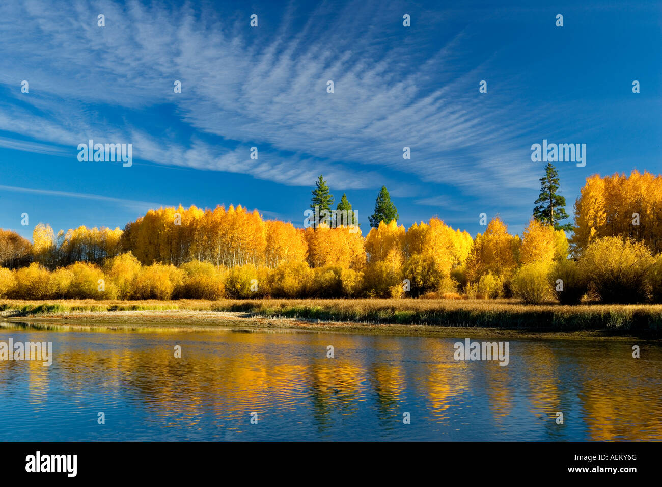 Fall colored aspen trees and Deschutes River Central Oregon - Stock Image