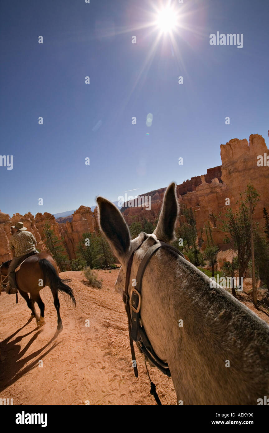 Horseback and mule rider in the hoodoo formations in Bryce Canyon National Park Utah - Stock Image