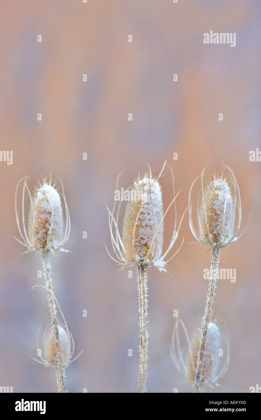 Snow on teasles Elkhorn Drive National Scenic Byway Oregon Stock Photo