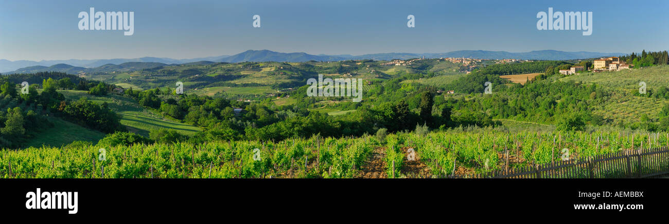 Panorama of hills of Chianti and grape vines at vineyard of Castello Il Corno Tuscany Italy - Stock Image