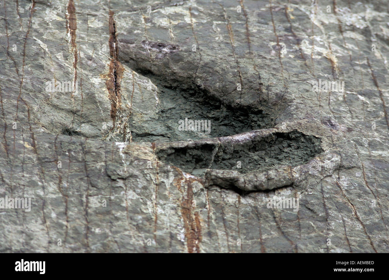 Cal Orko mountain dinosaur footprints A popular trip from Sucre 65 to 85 million year old prints Close up of print Bolivia - Stock Image