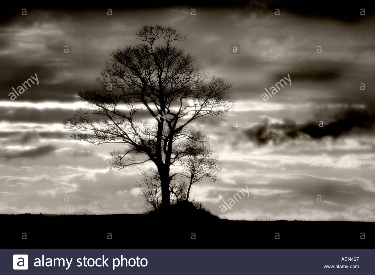 Solitary tree against a winter skyline mono image - Stock Image