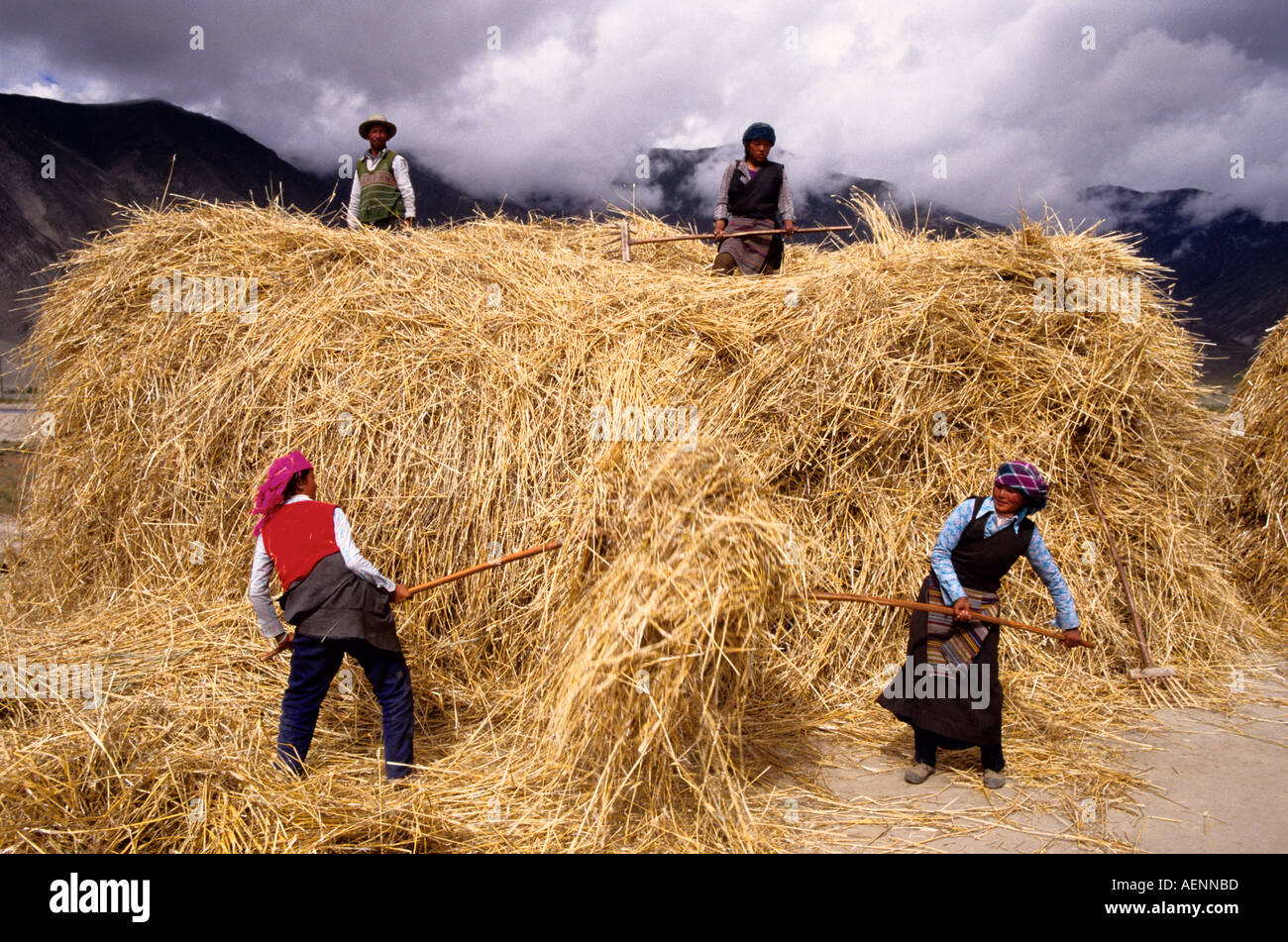 Lhasa Valley Tibet China Farm women pitching straw during autumn barley harvest  Stock Photo