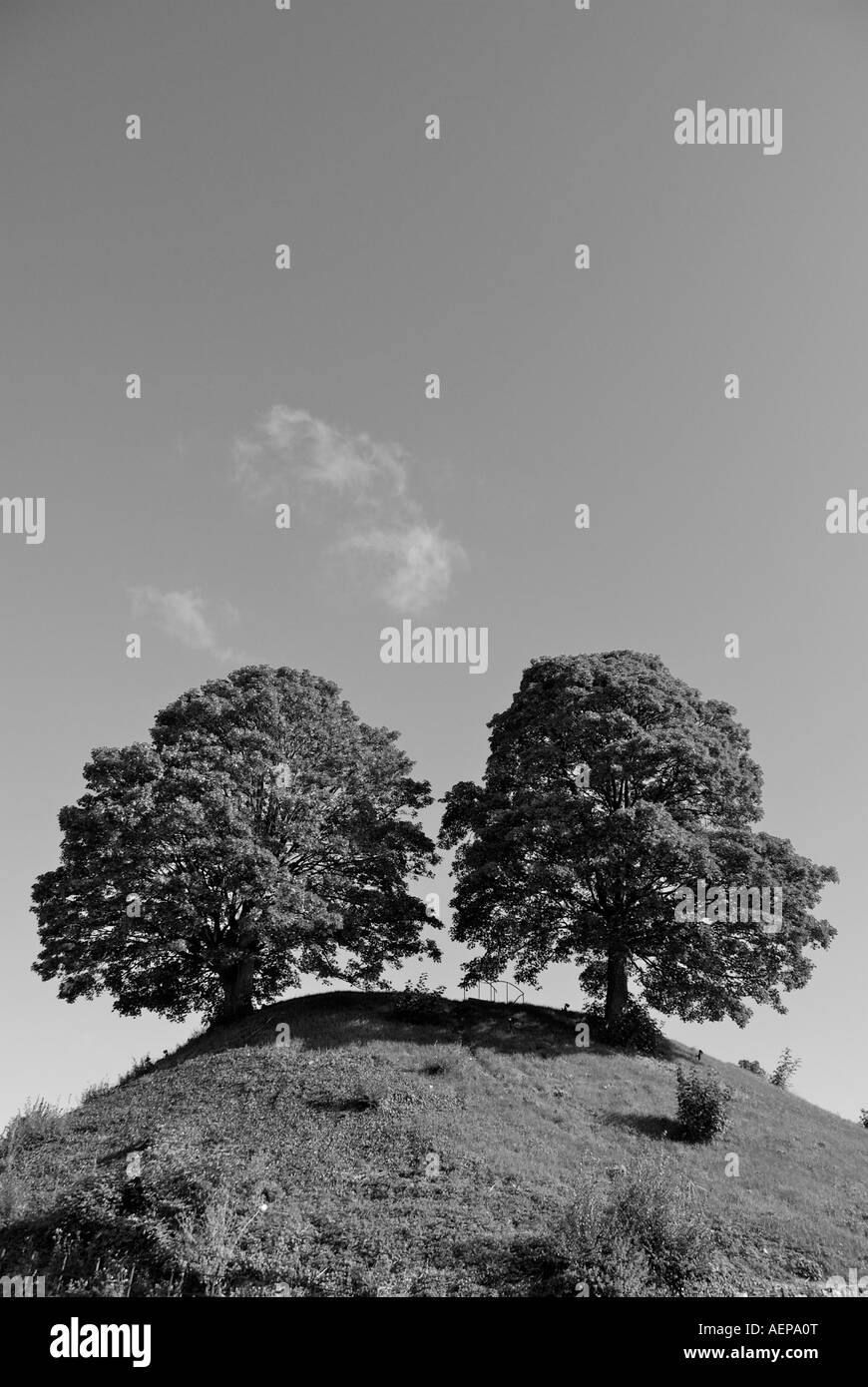 Twin mighty oak trees planted on a mound outside Oxford Castle in the united kingdom - Stock Image