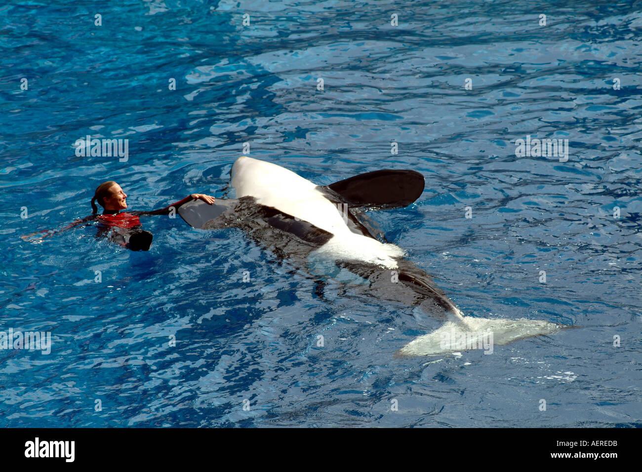 SeaWorld Orlando Florida USA the killer whale Shamu Stadium - Stock Image