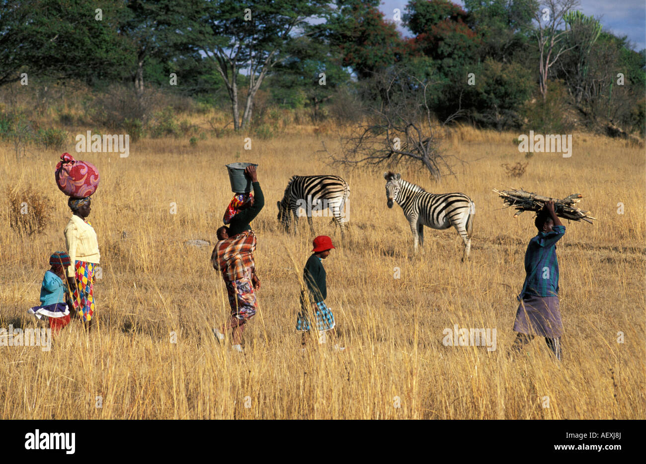 Zimbabwe Harare People walking through dry grass with zebras in background - Stock Image