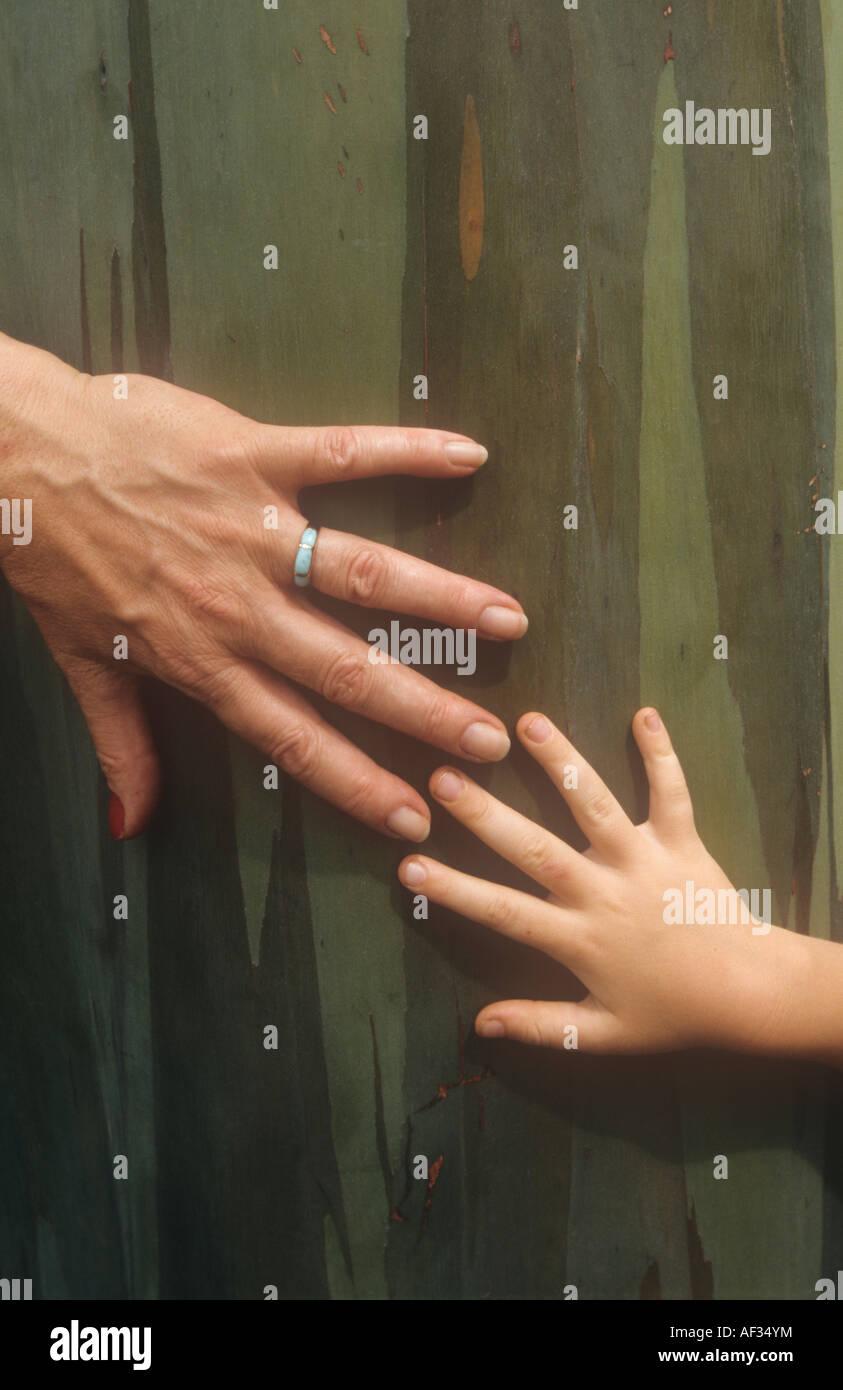 Adult and child's had meet across the bark of a rainbow eucalyptus tree. - Stock Image