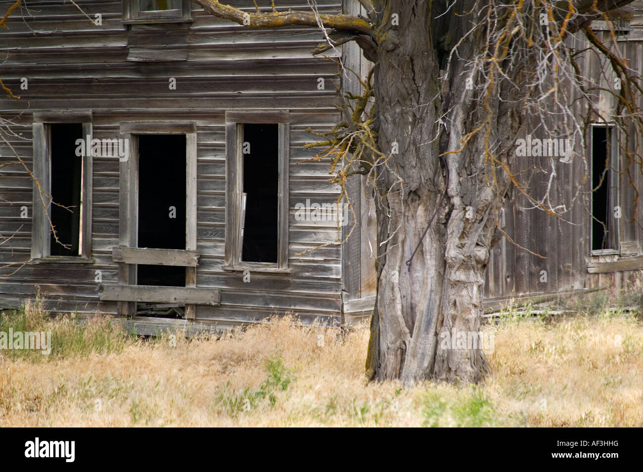 Old homestead dating into the early 1900's. - Stock Image