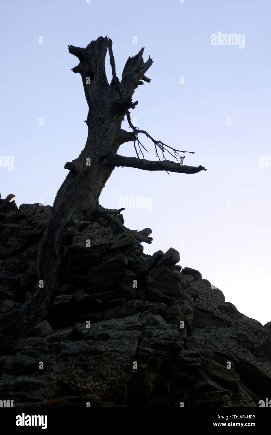 Old tree stump on a rocky outcropping - Stock Image