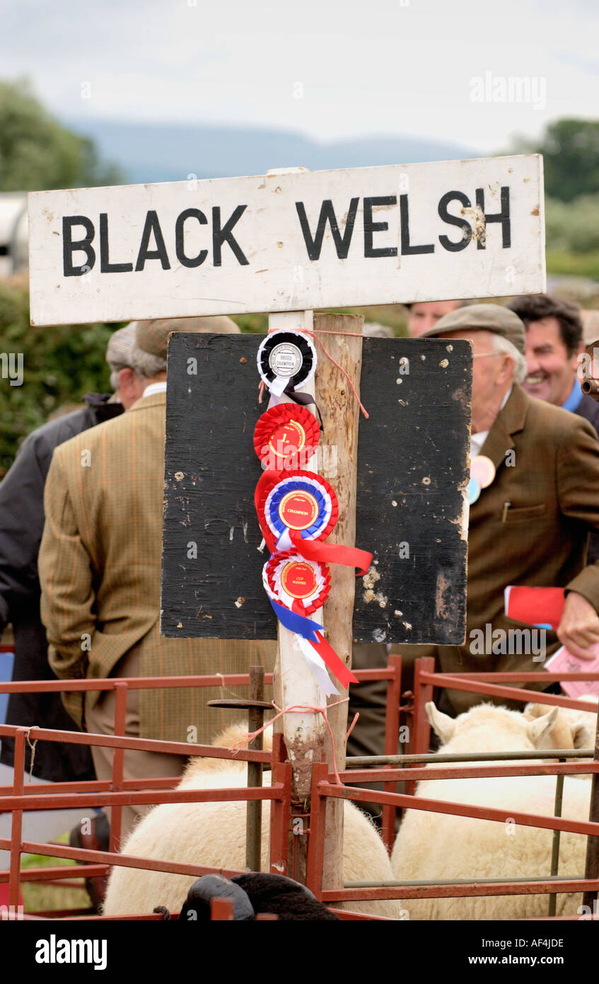 Livestock rosettes at Brecknockshire Agricultural Society annual show in its 250th year in the market town of Brecon Powys Wales - Stock Image
