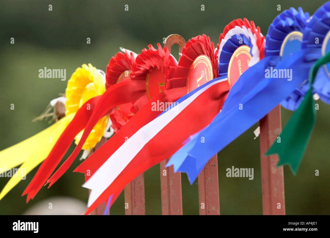Prizewinning livestock rosettes at Brecknockshire Agricultural Society annual show in its 250th year Brecon Powys Wales UK - Stock Image