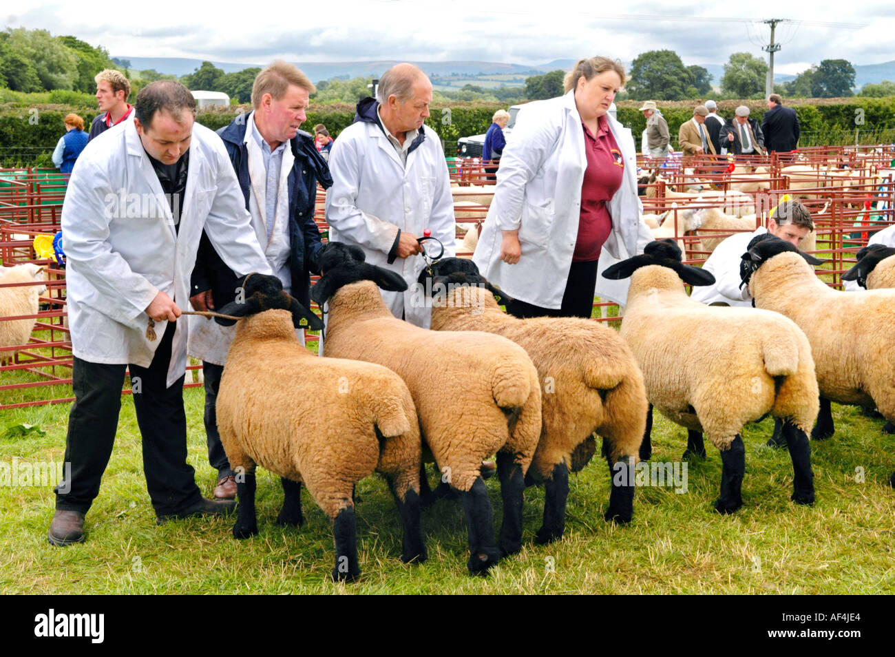 Farmers showing sheep at Brecknockshire Agricultural Society annual show in its 250th year in the market town of Brecon Powys - Stock Image