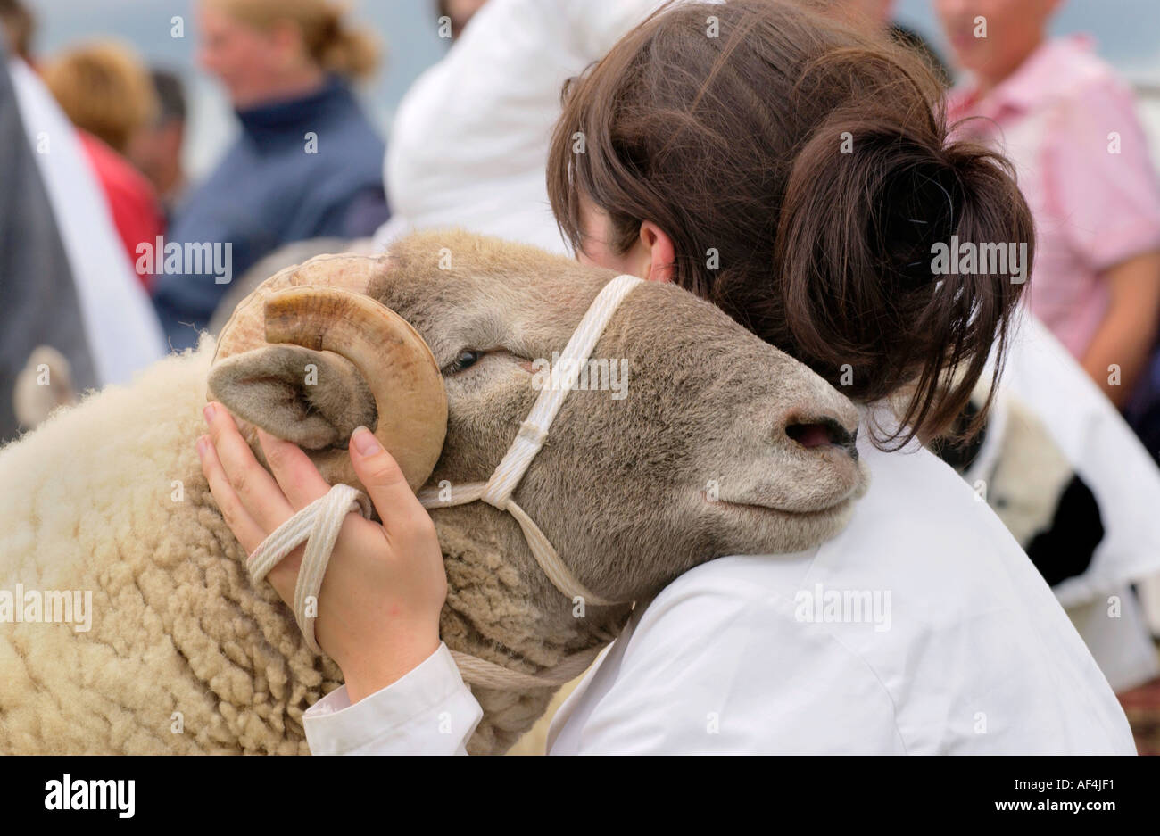 Young woman showing a ram at Brecknockshire Agricultural Society annual show in its 250th year in the market town of Brecon - Stock Image