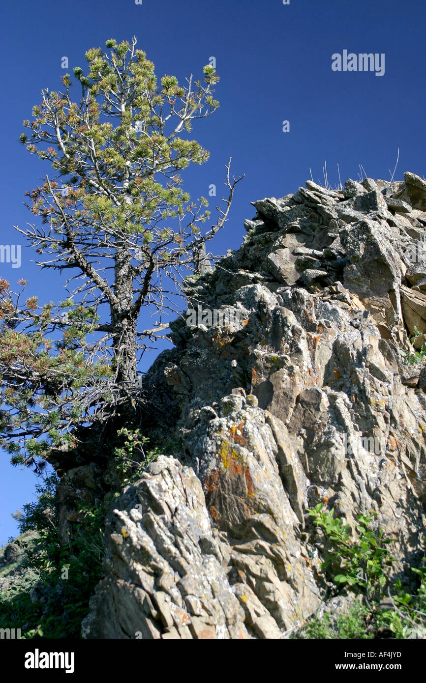 tree   on a rocky outcropping - Stock Image