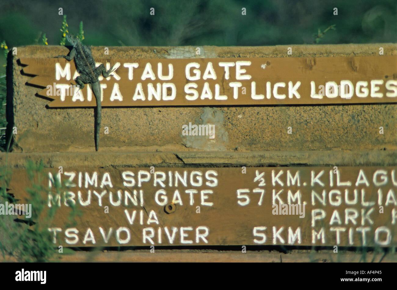 Lizard suns itself on a large wooden signpost in Tsavo National Park Kenya - Stock Image