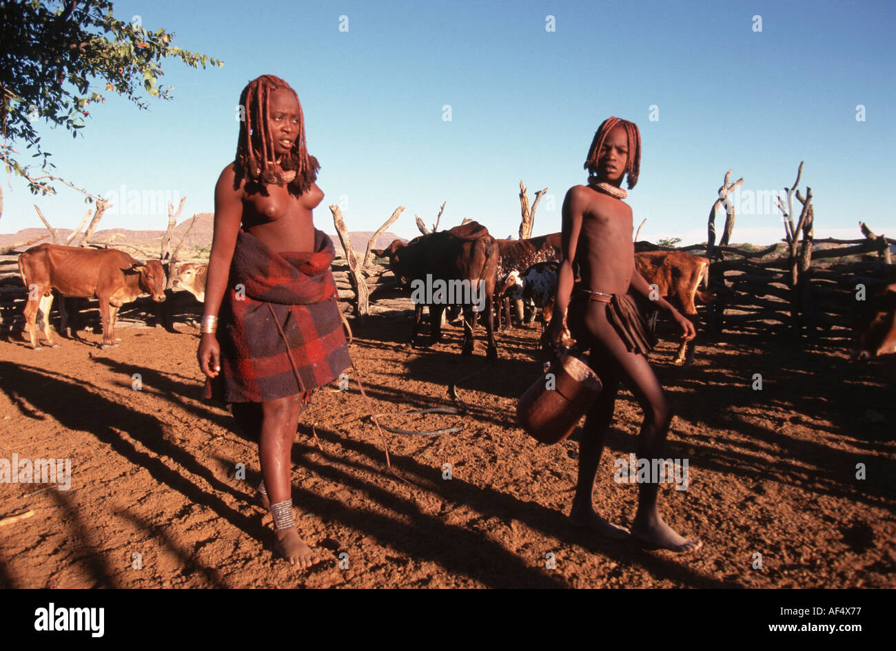 Himba in a cattle Kraal Northern Namibia - Stock Image