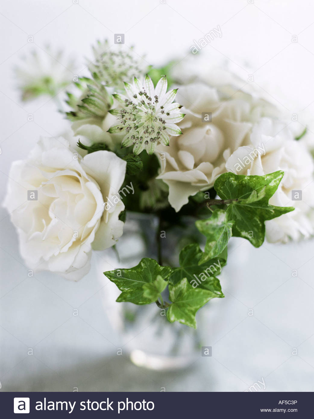 Bouquet of white roses and exotic flowers Stock Photo: 13836969 - Alamy