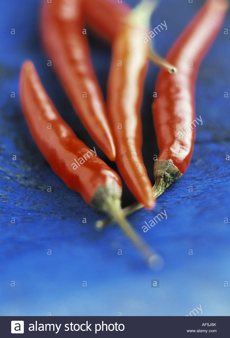 Red chili peppers on blue background - Stock Image