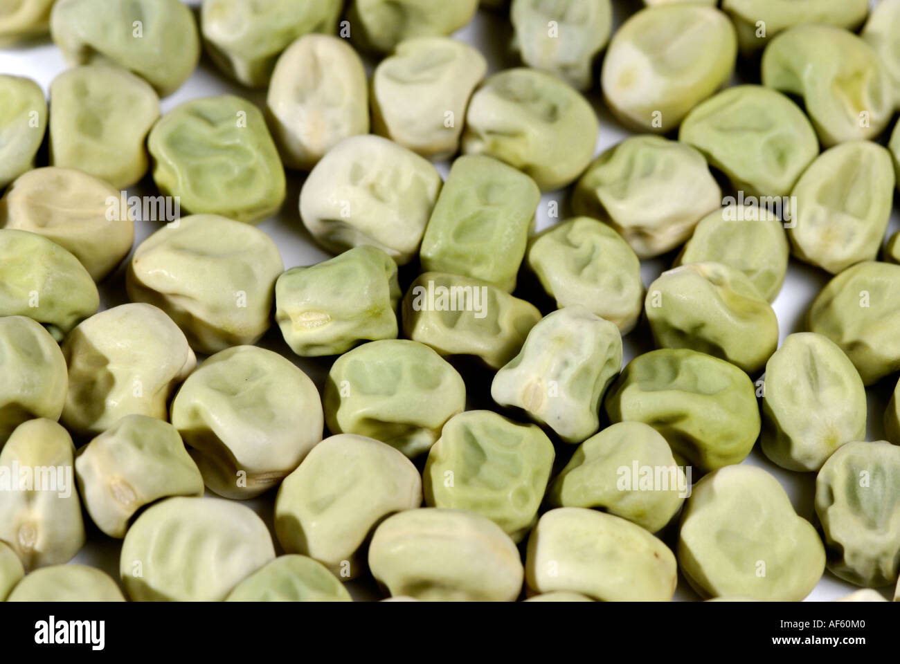 Green, wrinkled pea seeds, traits Gregor Mendel studied in his heredity experiments. Wrinkled trait results from a gene mutation - Stock Image
