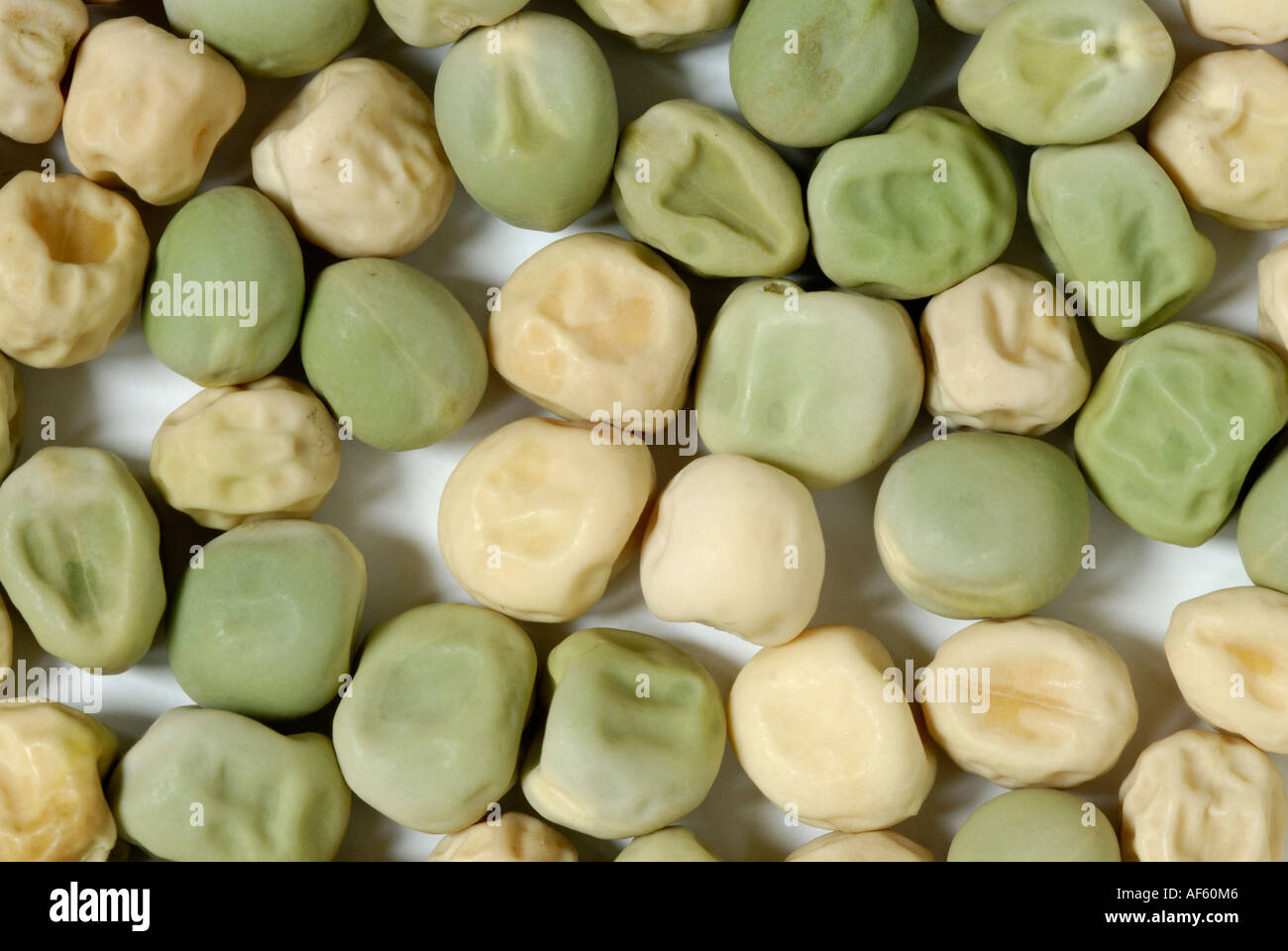Pea seeds green, yellow, smooth, wrinkled, traits Gregor Mendel studied in his genetics heredity experiments. - Stock Image