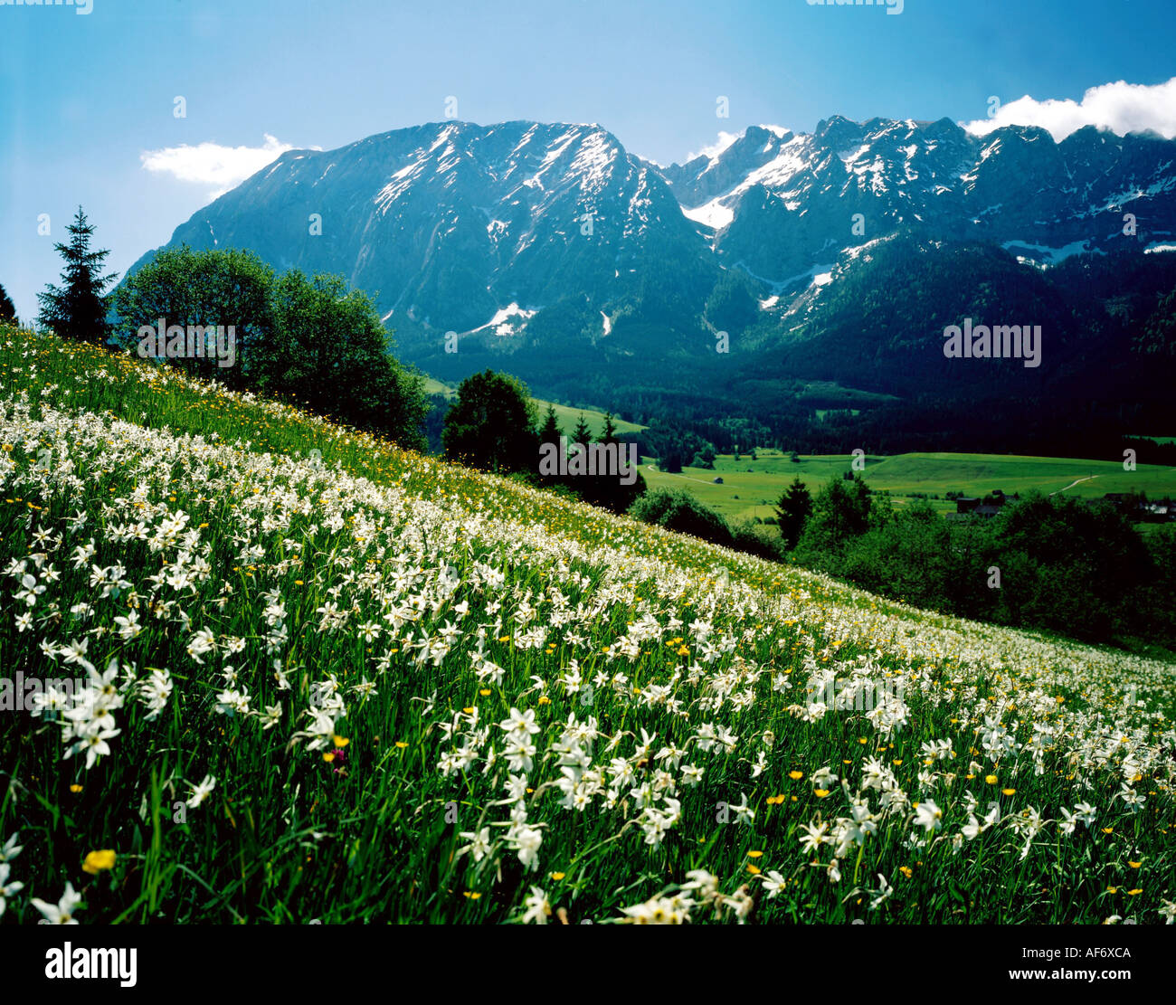 geography / travel, Austria, Styria, landscape / landscapes, Grimming, with flower meadow in foreground, spring, Stock Photo