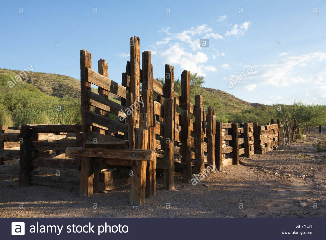 Cattle Wooden Loading Chute Stock Photos Cattle Wooden Loading
