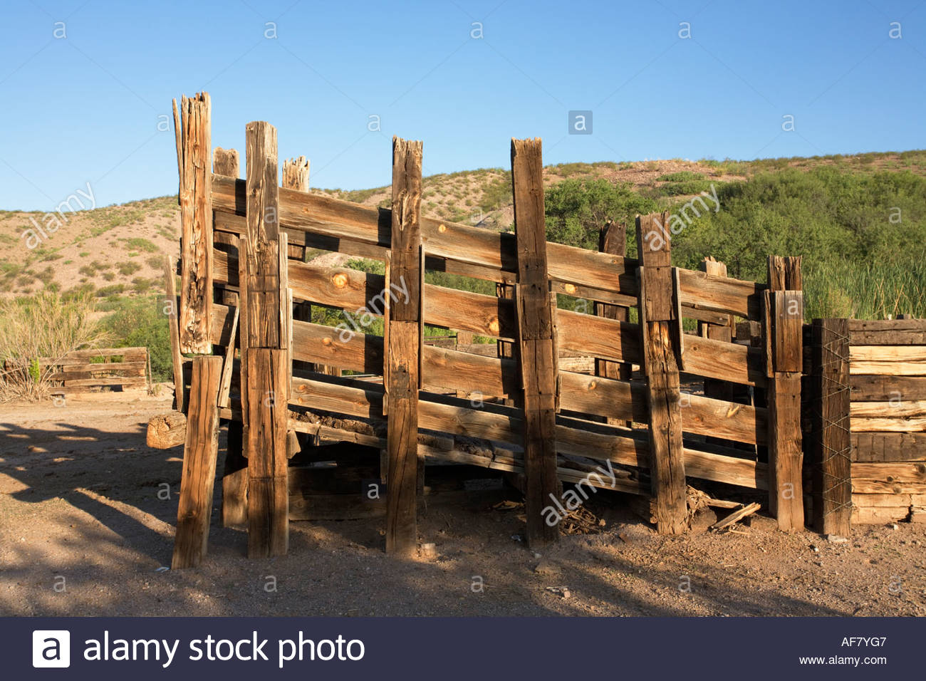 Wooden Load Out Chute For Loading Cattle Livestock Into Trucks Stock