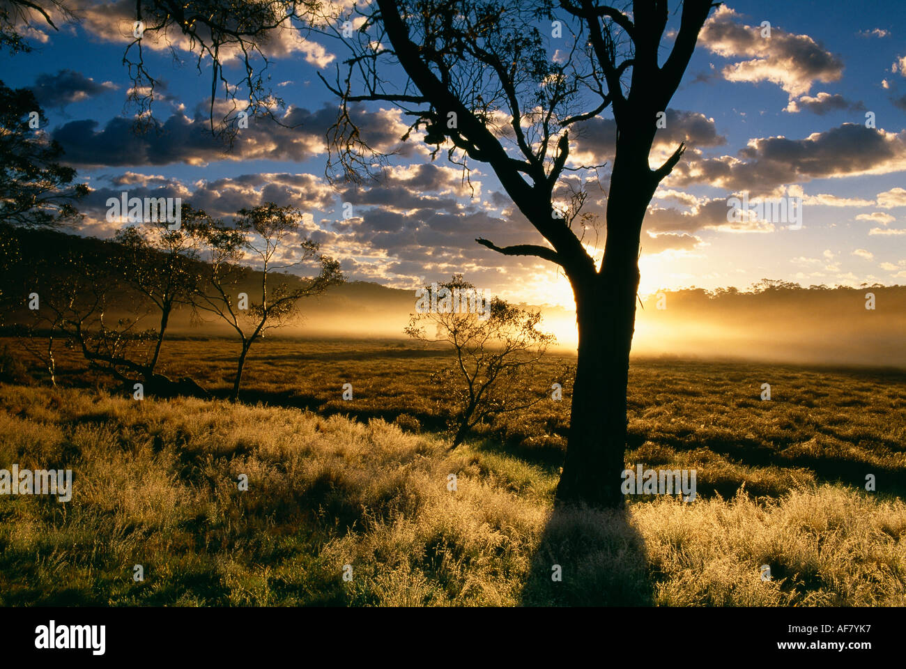 Polblue Marsh at dawn Barrington Tops National Park New South Wales Australia - Stock Image