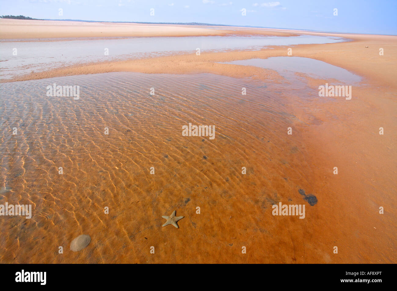 Shallow estuarine water with a star fish and a wide view over an extensive beach - Stock Image