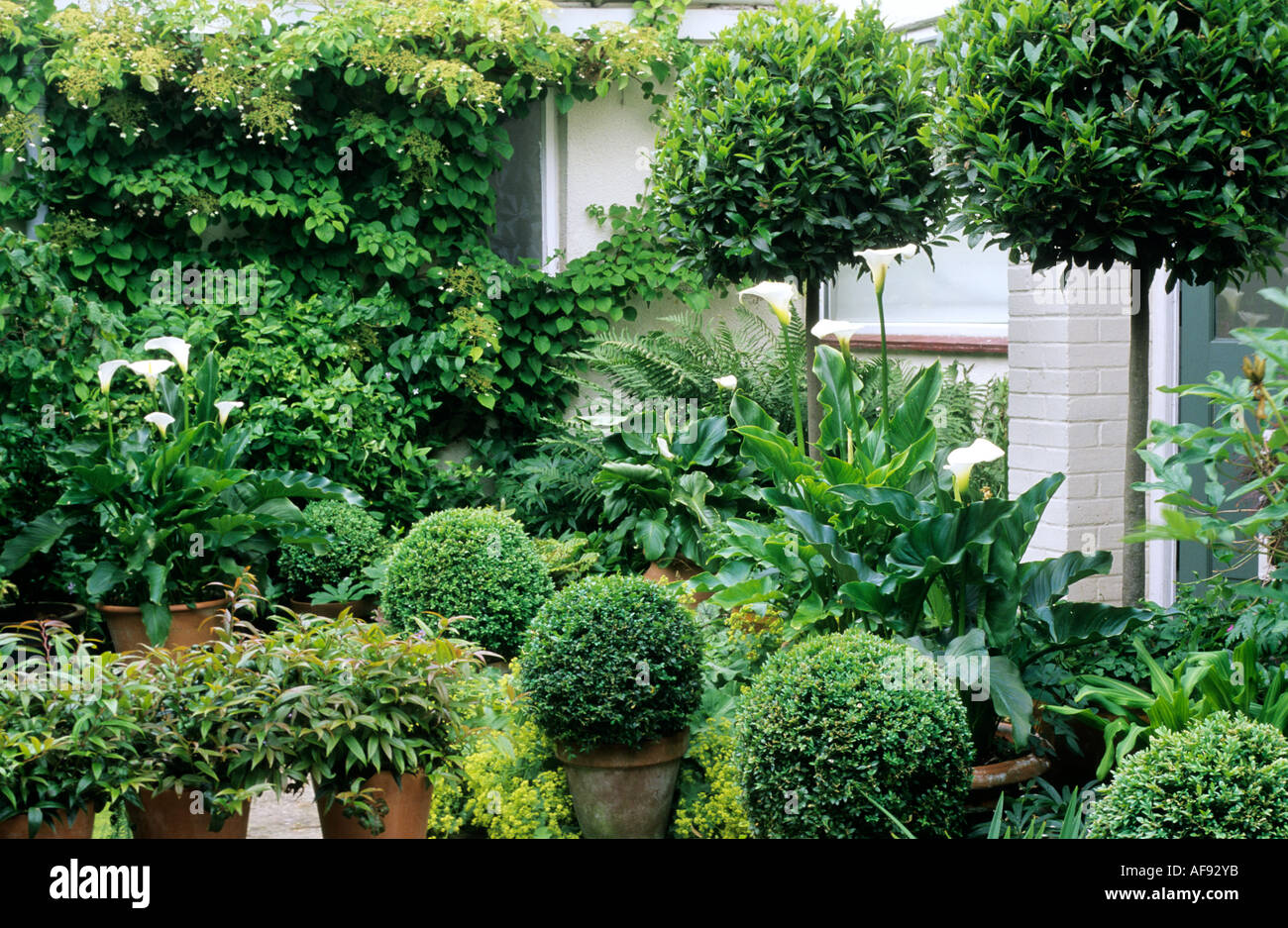 Green And White Topiary Garden Box Standard Bay Balls Stock Photo Alamy