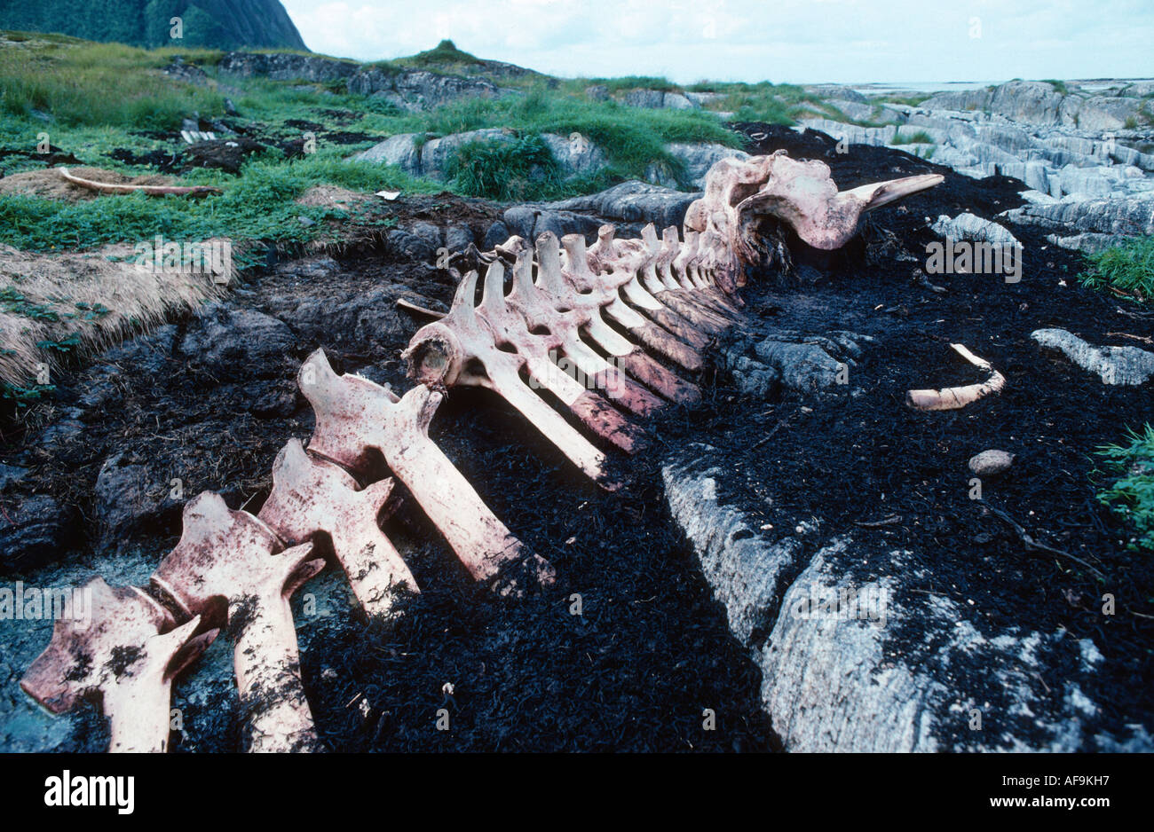 Spermaceti Whale High Resolution Stock Photography And Images Alamy