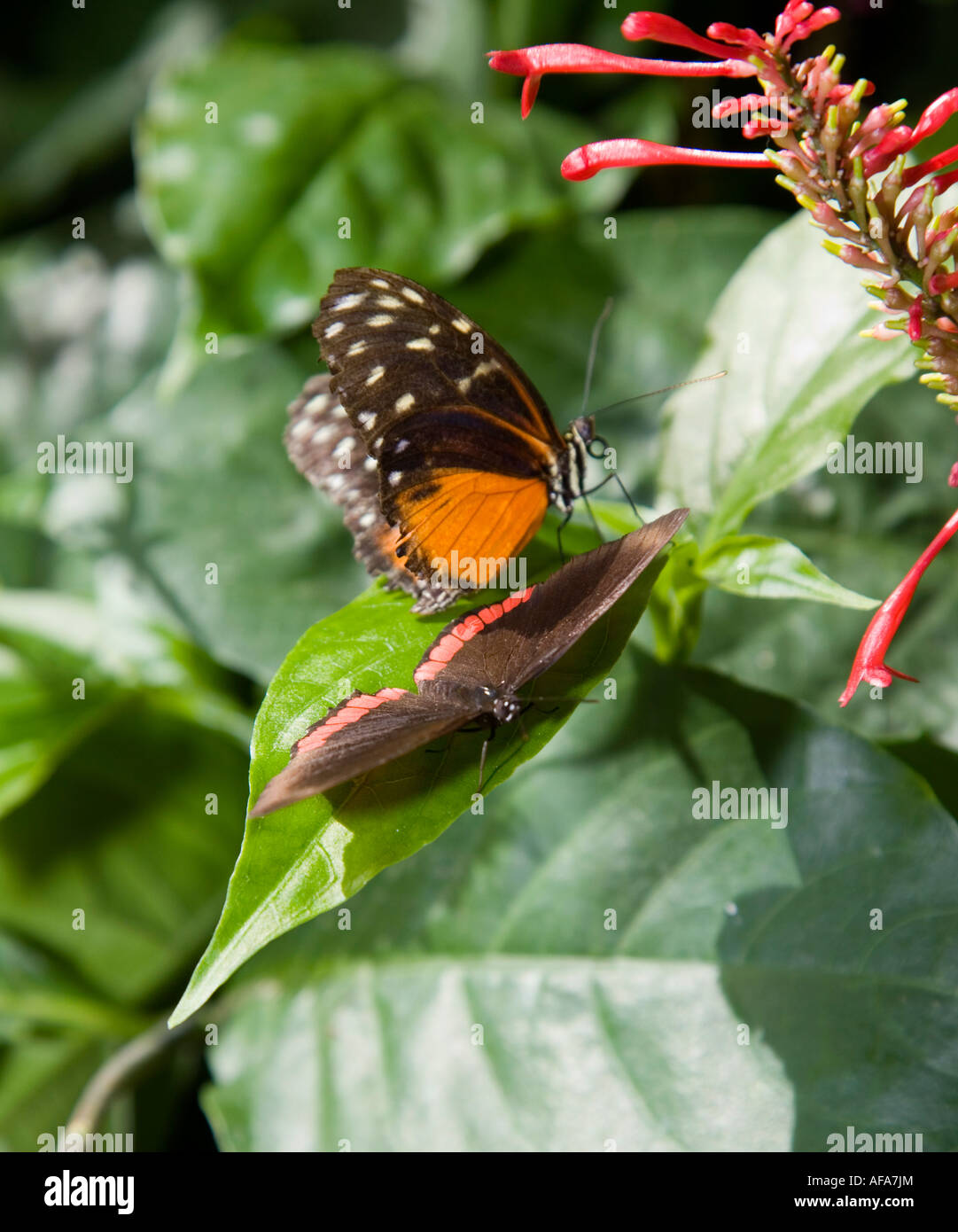 Amazing Butterfly from all over the World - Stock Image
