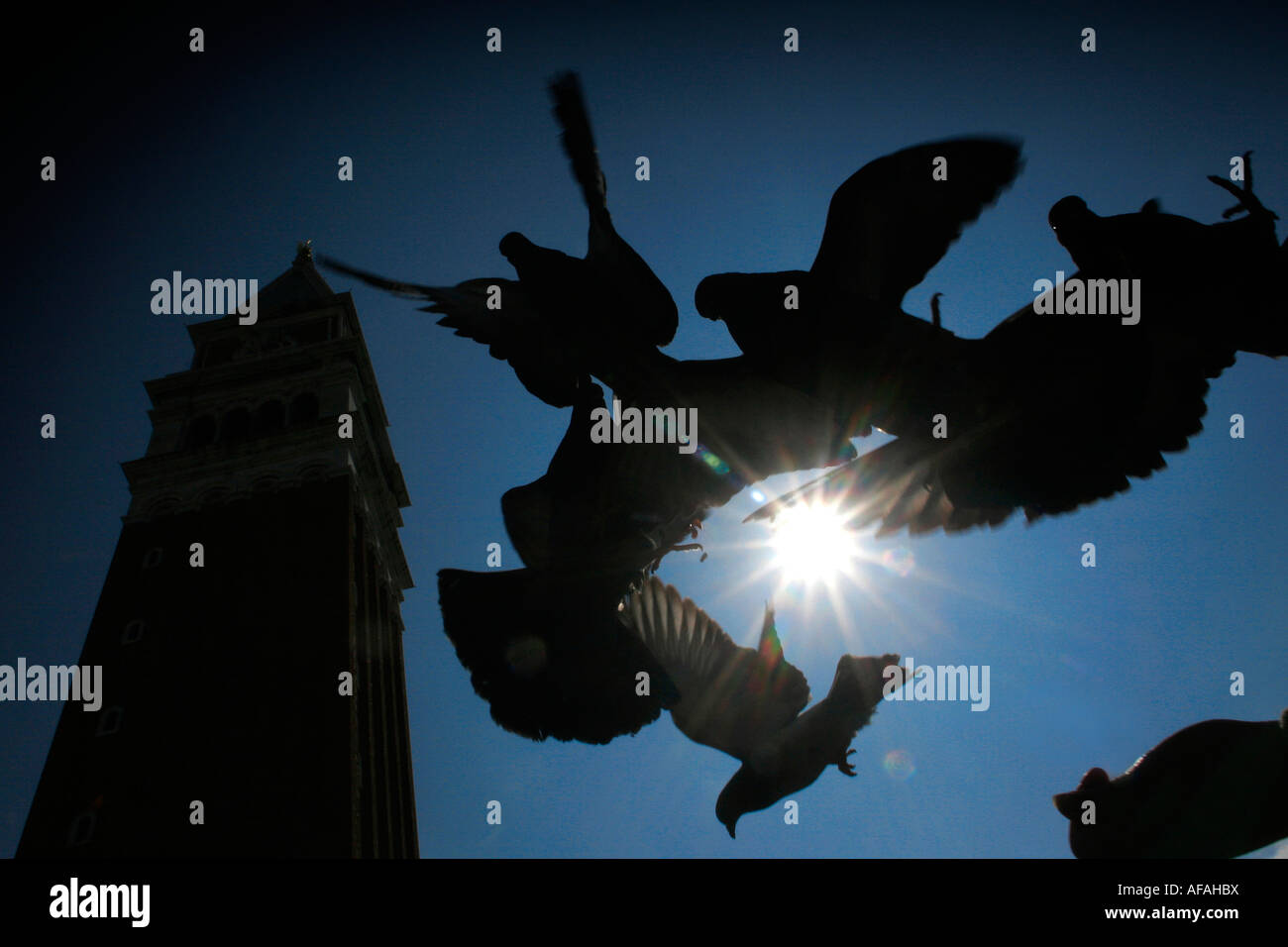 Pigeons at St. Mark's Square in Venice, Italy. Stock Photo