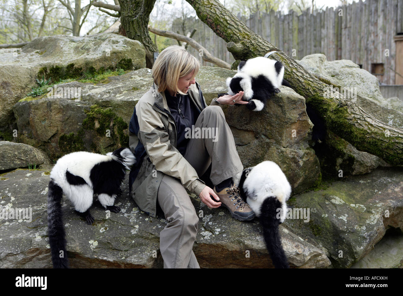 The zoo veterinary surgeon of the zoo Allwetterzoo Dr Sandra Silinski with the Ruffedlemurs - Stock Image