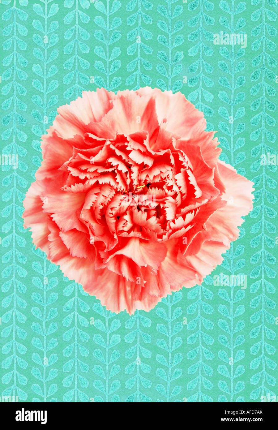 Illustration of pink carnation against a textured patterned background - Stock Image