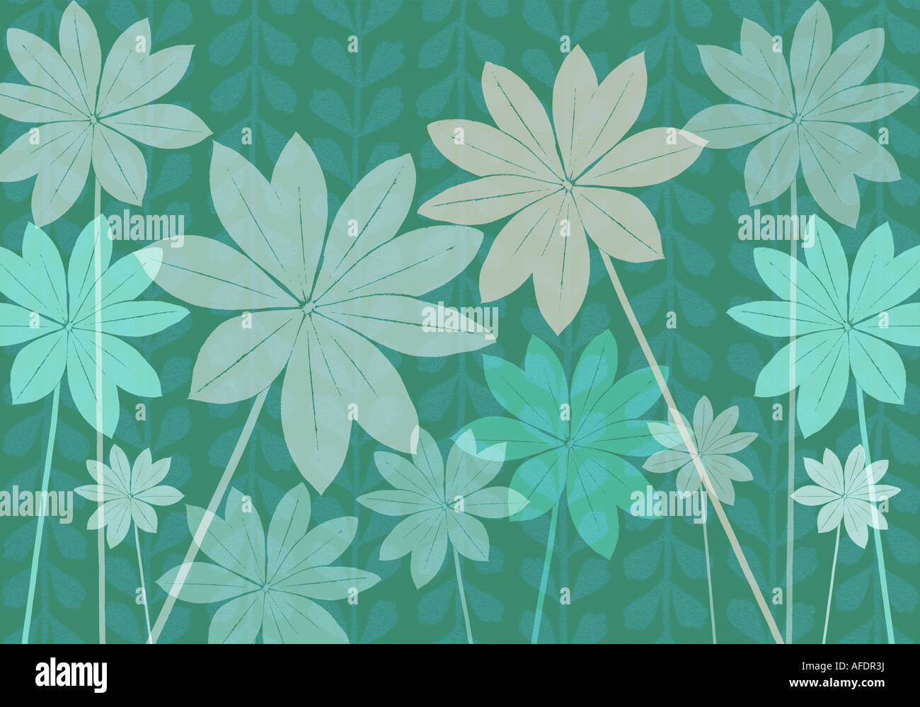 Illustration of lupin foliage - Stock Image