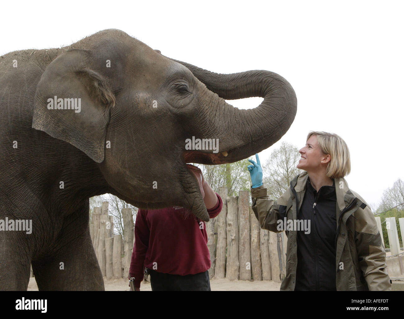 The zoo veterinary surgeon of the zoo Allwetterzoo Dr Sandra Silinski with the female elephant - Stock Image