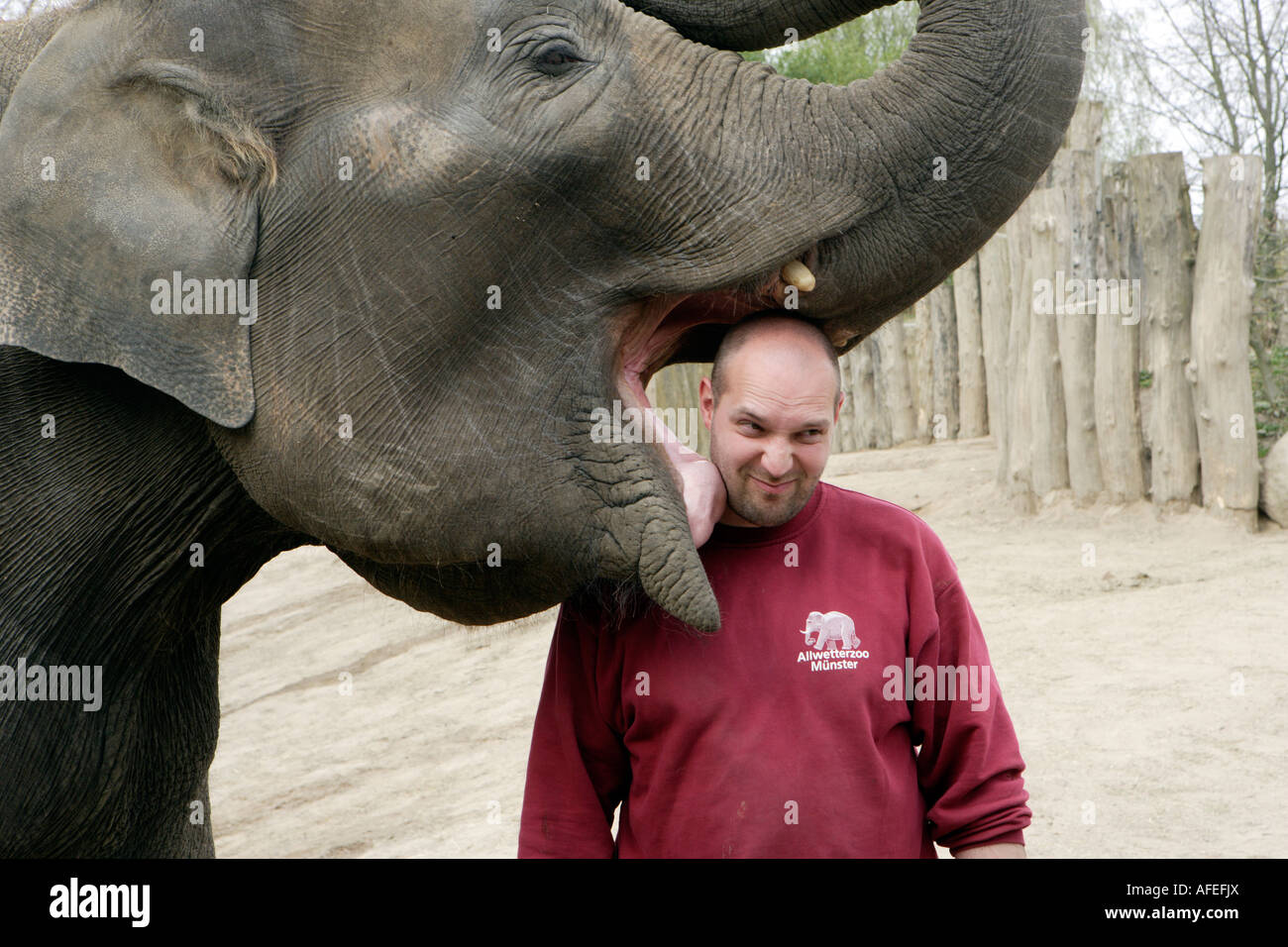 The zoo keeper Uwe Schneider gets a kiss of the elephant CORNY - Stock Image