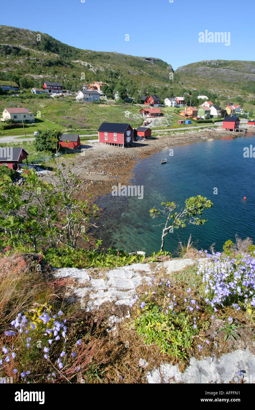 coastal summer scene nord trondelag summer flowers norway - Stock Image