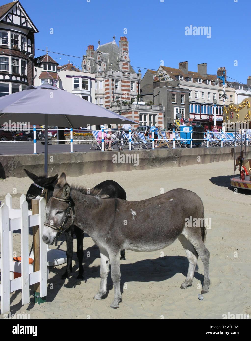Donkeys on the beach at Weymouth Dorset Stock Photo