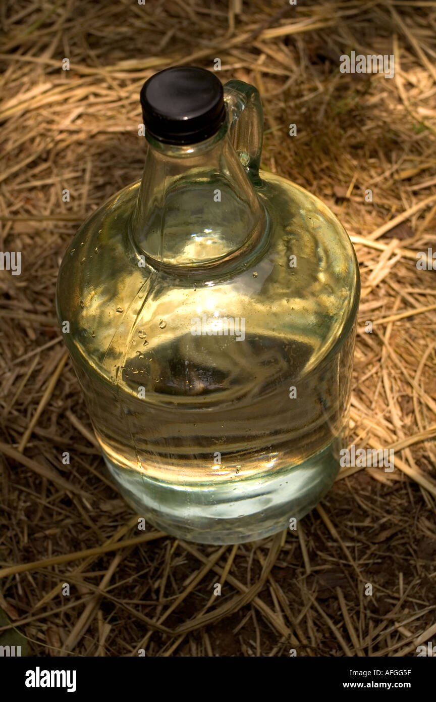 A Cosby Moonshiner Producing Pure Tennessee Corn Whisky using a modern distillation process - Stock Image