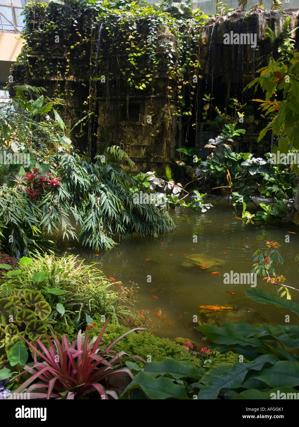 A pond in the indoor tropical plant section in the parc phoenix the a pond in the indoor tropical plant section in the parc phoenix the botanical gardens in nice french riviera workwithnaturefo